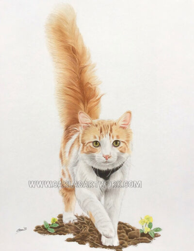Atlas, Tabby Cat, 9 x 12 inches, A4+