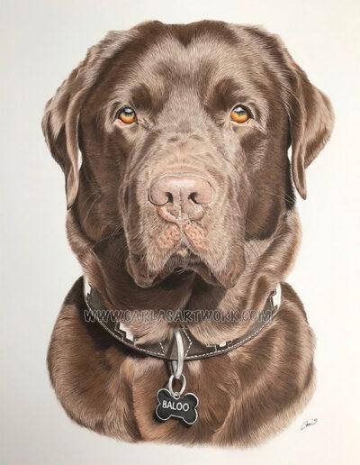 Baloo,-Chocolate-Labrador,-14-x-17-inches,-A3+