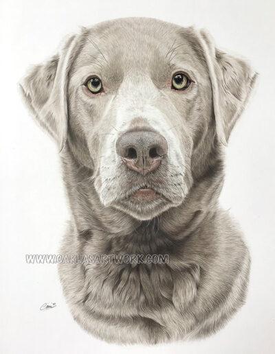 Beatrix,-Silver-Labrador,-14-x-17-inches,-A3+