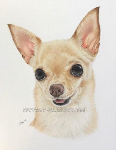 Cinnamon,-Chihuahua,-7-x-9-inches,-A5+