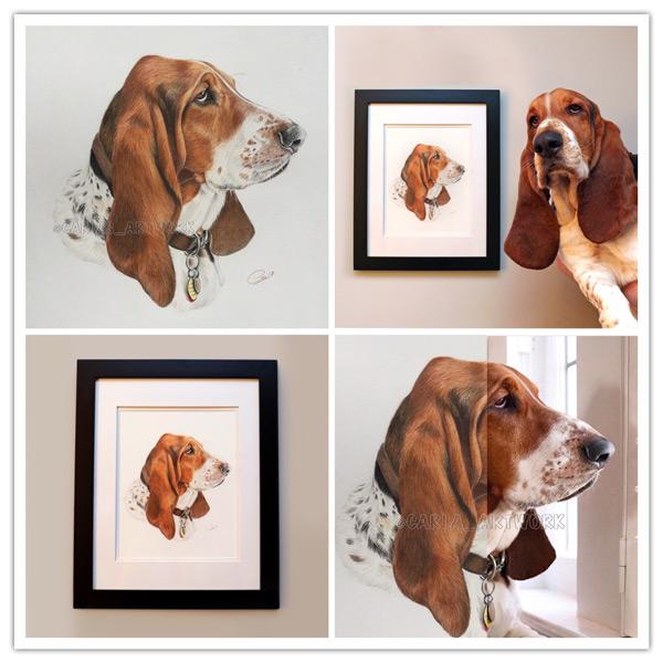Dean-the-Basset-Hound-collage