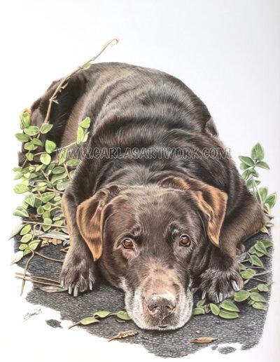 Hannah,-Chocolate-Labrador,-9-x-12-inches,-A4+