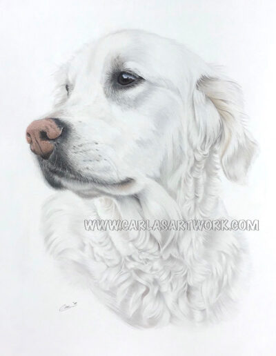 Lady,-Golden-Retriever,-14-x-17-inches,-A3+