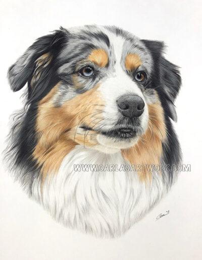 Maggie,-Australian-Shepherd,-14-x-17-inches,-A3+