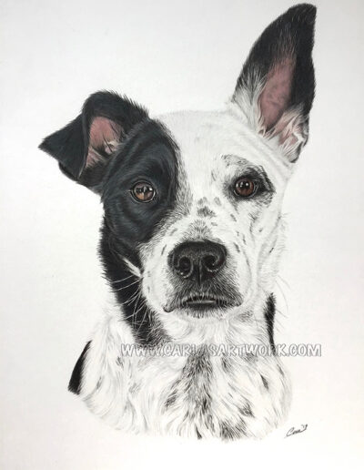 Sammy,-Mixed-Breed,-9-x-12-inches,-A4+