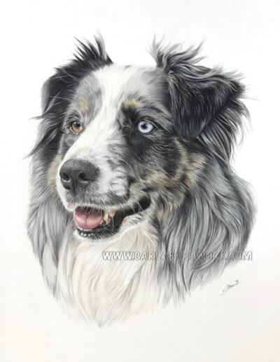 Sophie,-Australian-Shepherd,-14-x-17-inches,-A3+