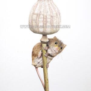 Harvest Mouse on Poppy Pod